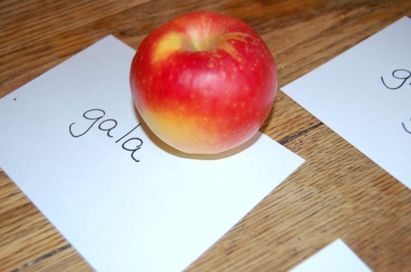 """Happy """"Eat a Red Apple Day"""""""