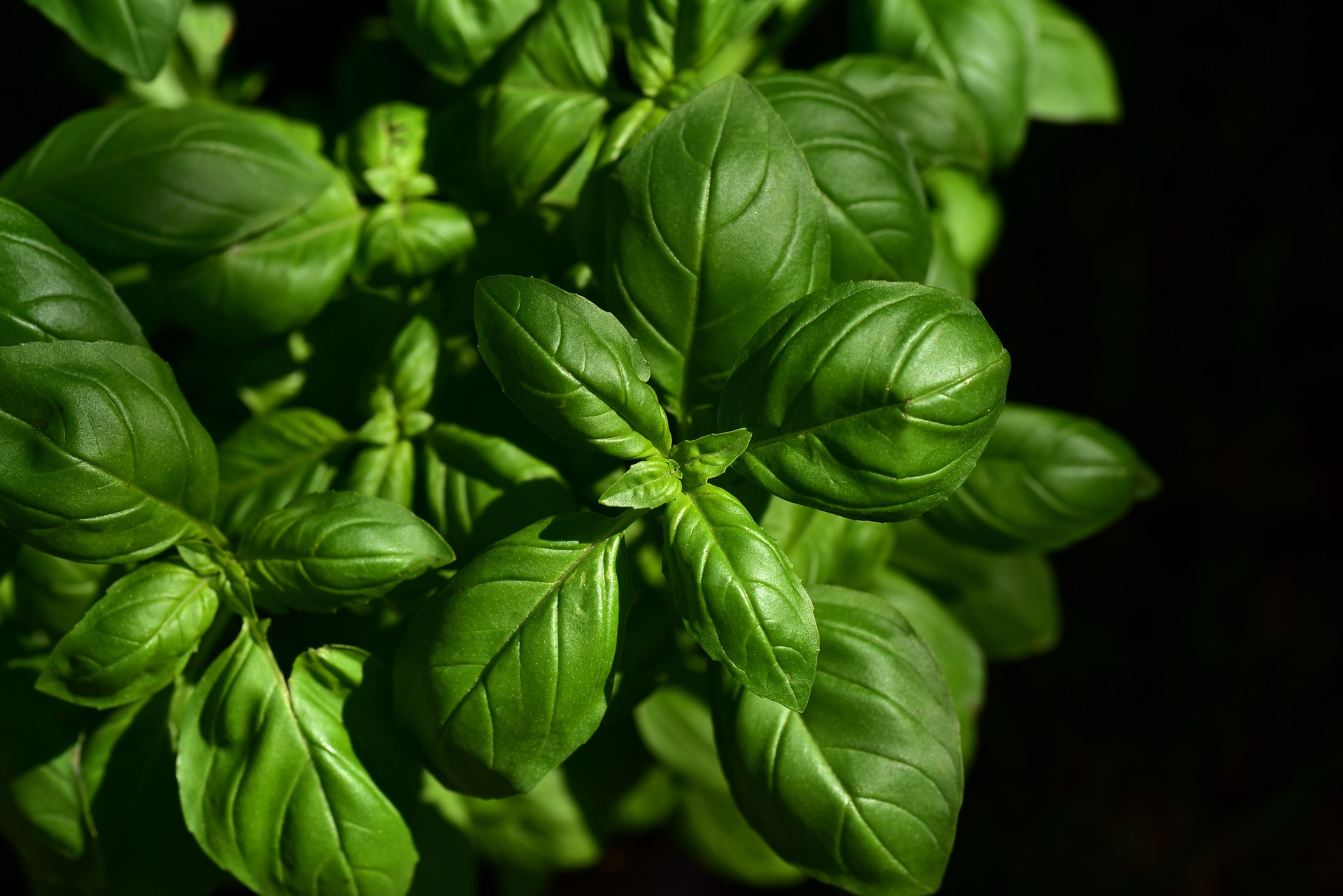 The easiest herbs and veggies to grow